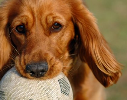 Gooooaaaalllll:Teaching Your Dog to Play Soccer