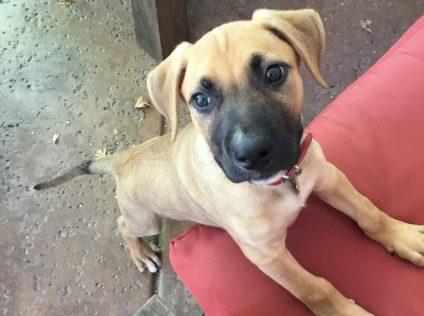 Virtual Puppy Head Start Class