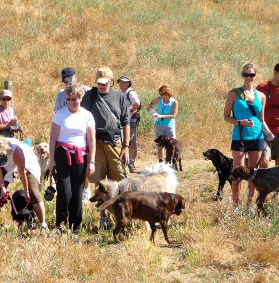 Dog Dynamics Briones Hike