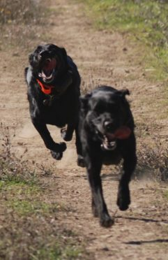 Briones Board and Train Hike Training Reliable Off Leash Training