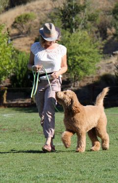 Private Training Orinda Well Trained Dog with Owner