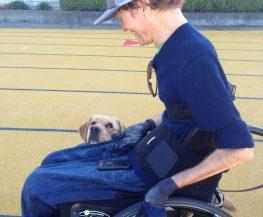Private Dog Training Instruction Berkeley Training Heel Command