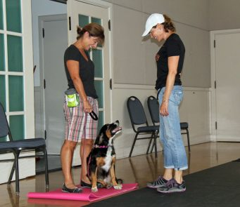 Orinda Beginning Obedience Group Dog Training