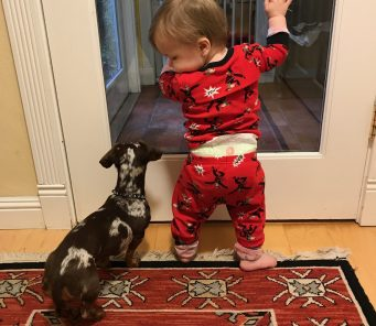 Training the Family Pet manners with babies