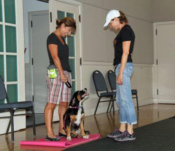 Orinda Beginning Obedience Group Dog Training