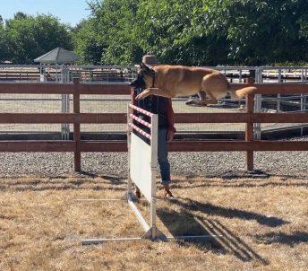 Danville French Ring Sport Hurdle Dog Training