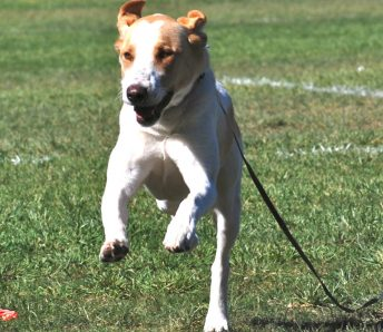 Orinda Motivational training preparation for off leash recall
