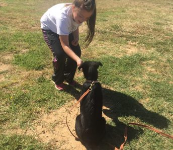 Training Seminar France Children training dog obedience