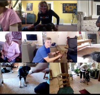 Dog Dynamics Online Virtual Training