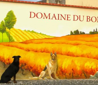 Obedience Training France