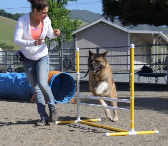 All Breeds Fun Agility Danville