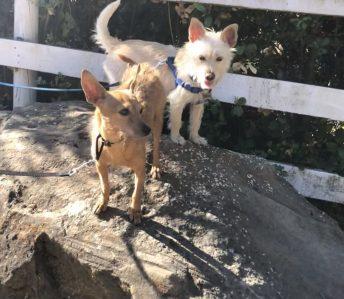 Sue Marlais Dog Trainer Dog Dynamics