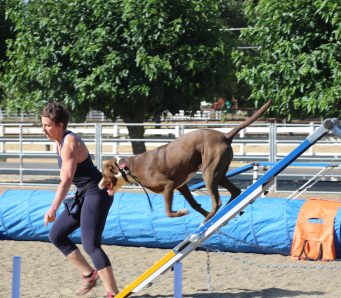Danville Sue Marlais teaching a fun agility class in Danvile