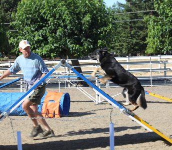 Dog Dynamics Danville Agility Class