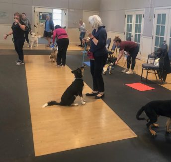 Sue Marlais Orinda Group Dog Training Obedience