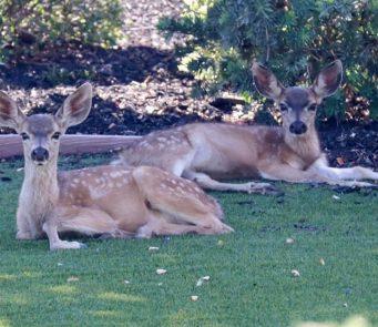 Sue Marlais Deer Training Danville