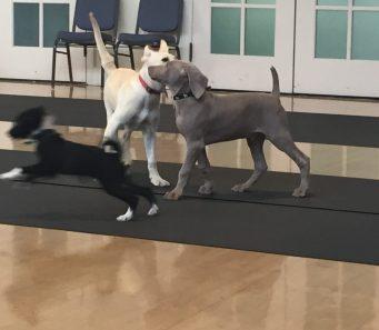 Orinda Puppy Socialization Class