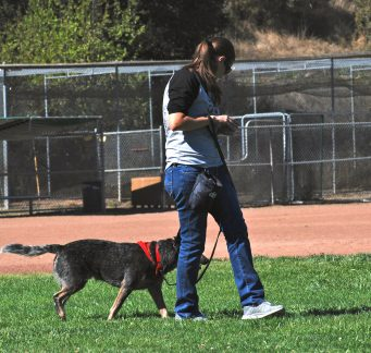 Orinda Dog Training