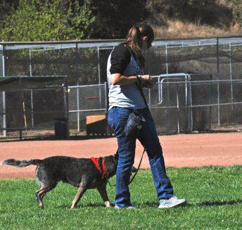 Orinda Dog Training